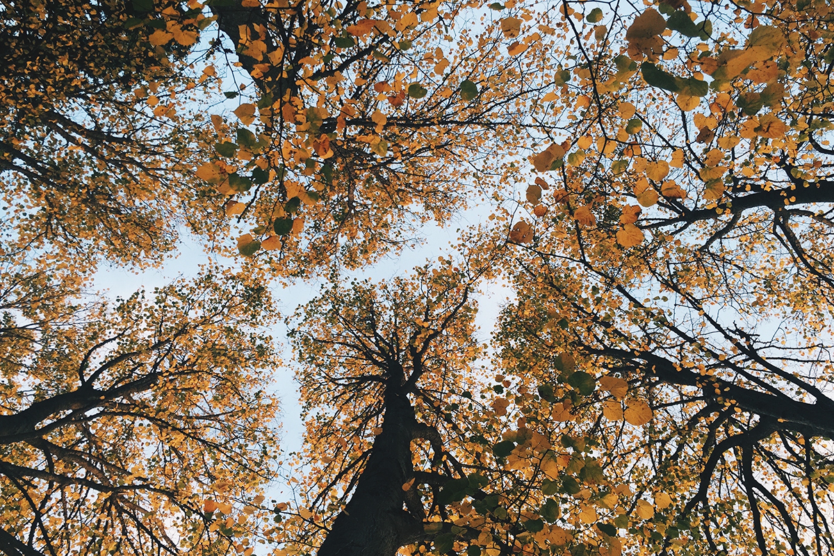 zijlen_melsemaheerd_sfeer_tree